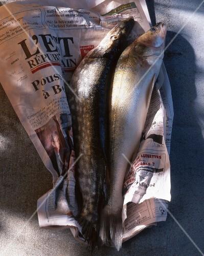 Two fresh fish on newspaper