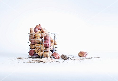 Assorted potato varieties in a wire basket