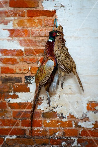 Partridge and pheasant