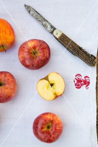 Apples (Royal Gala) with a knife on a tea towel