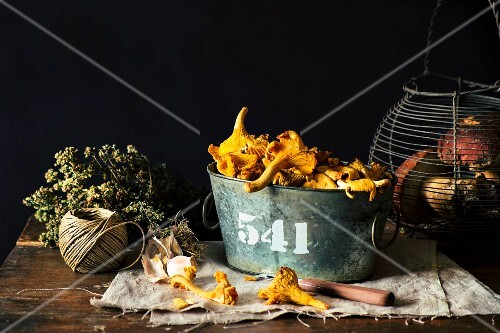 Fresh chanterelles in a tin bucket and porcini mushrooms in a wire basket