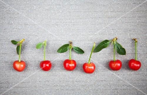 Fresh sour cherries in a row