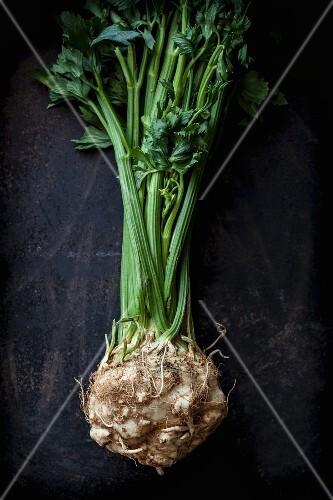 A fresh celeriac root
