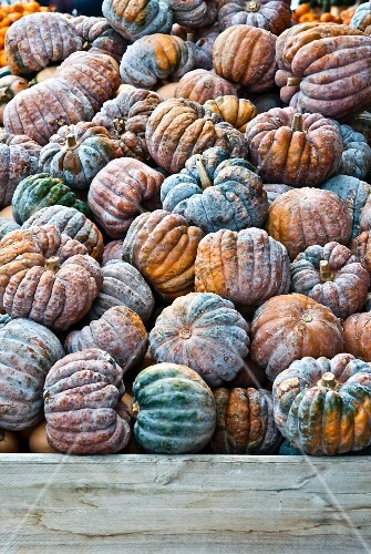 Lots of mouldy squash in a mound