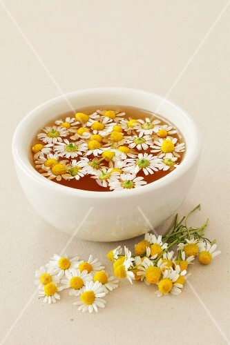 Camomile tea with fresh camomile flowers