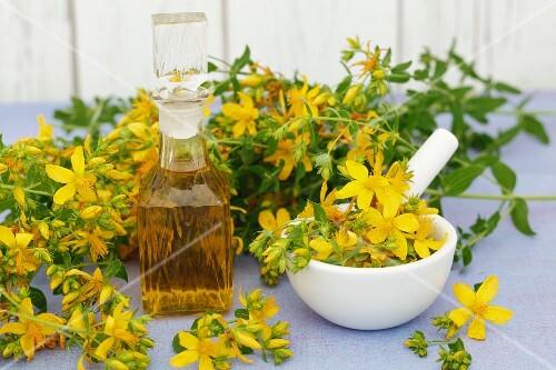 St. John's wort oil and fresh St. John's wort in flower