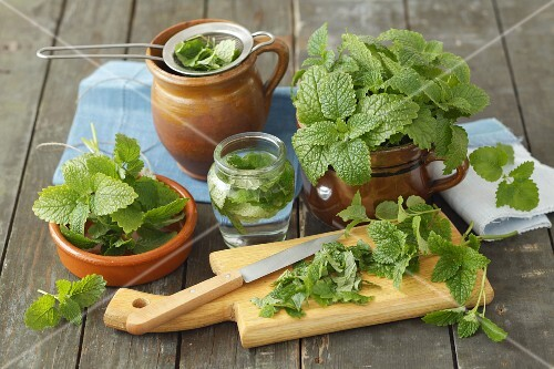 Fresh lemon balm and infusion