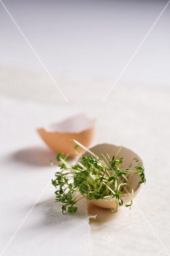 Fresh cress in an eggshell