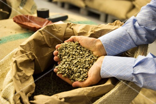 A man's hands lifting green, unroasted coffee beans out of a sack of coffee