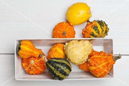 Assorted varieties of ornamental squash