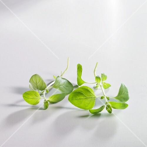 Sprigs of oregano