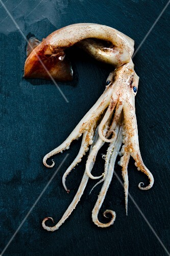 A whole squid including tentacles on a slate slab
