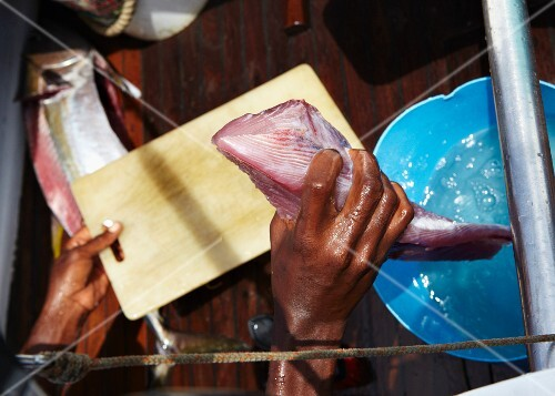 Fresh-caught yellow tail tuna for sushi