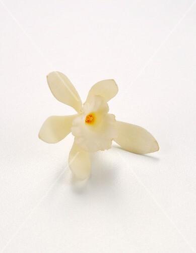 A vanilla flower against a white background