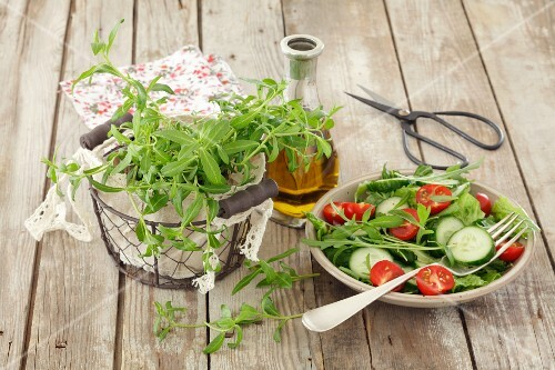 Romaine lettuce with cucumber, tomatoes and tarragon