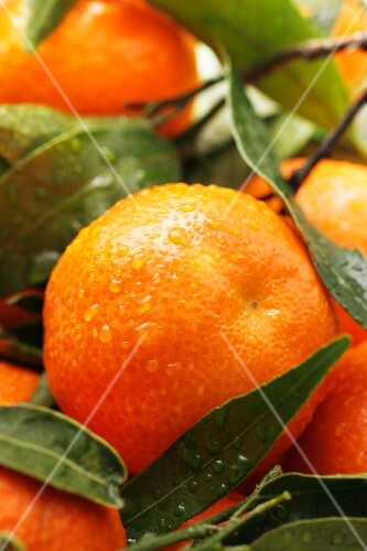 Mandarins with droplets of waters and leaves (close-up)