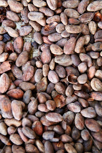 Cocoa beans (filling the image)