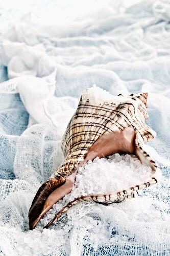 Sea salt in a shell