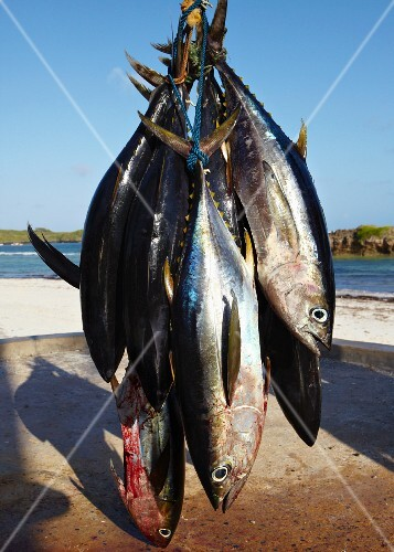 Freshly caught yellowfin tuna, hanging up