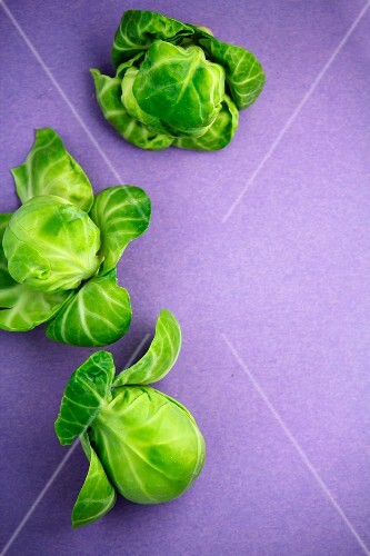 Brussels sprouts on a purple surface