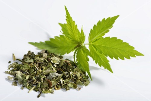 Hemp (Cannabis sativum), fresh leaves and dried