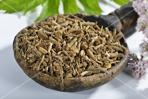 Dried chopped valerian root in a wooden spoon