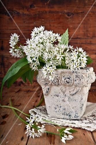 Wild garlic flowers in a stone vase