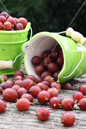 Red gooseberries in small ceramic buckets