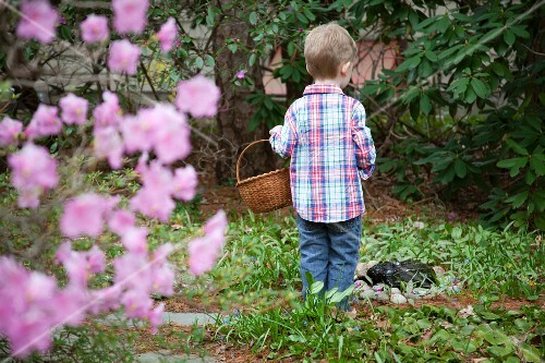 Young Boy Standing With Basket in Garden, Rear View