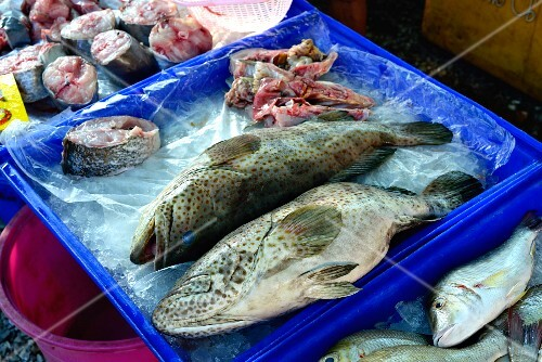 Fresh whole grouper at a market in Thailand