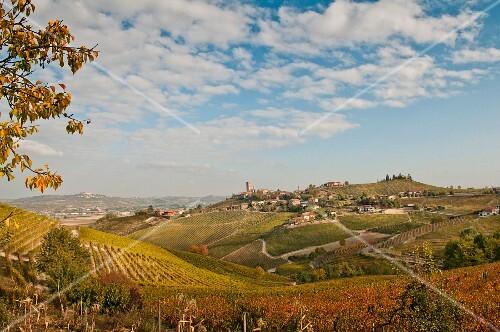Hillside Village and Vineyard, Barbaresco, Italy