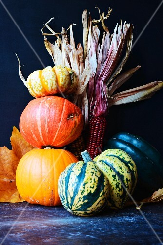 Halloween pumpkins, gourds and indian corn