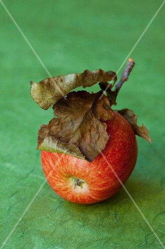 An organic apple with dried leaves