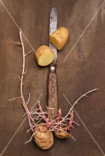 A halved potato and sprouting potatoes