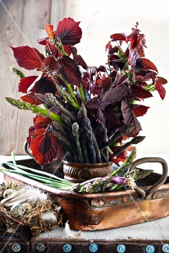 An arrangement of green asparagus and leaves in a flowerpot and quail's eggs in a bird's nest