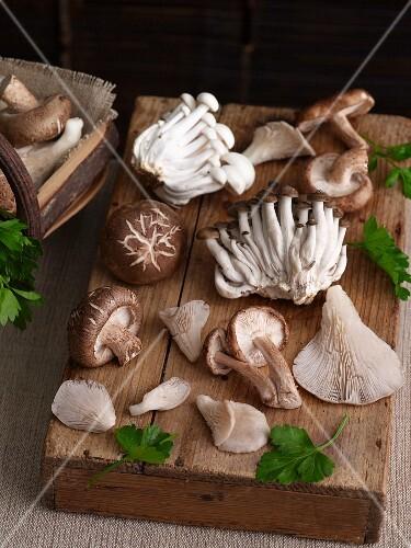 Various fresh edible mushrooms from Asia