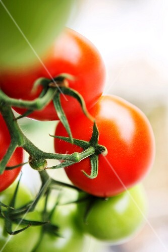 Right and unripe vine tomatoes (close-up)