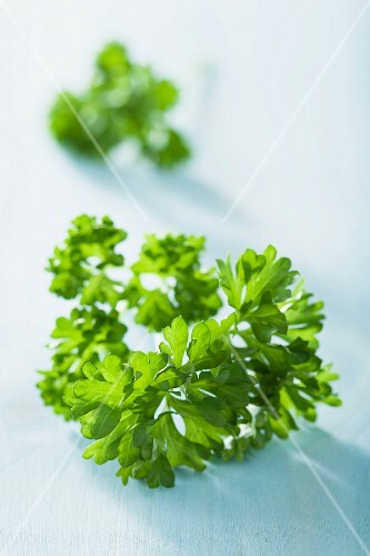 Parsley (close-up)