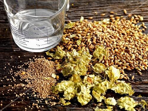 Beer ingredients: hops, barley, yeast and water