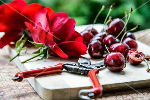 Cherries, red rose petals and garden shears on a wooden board