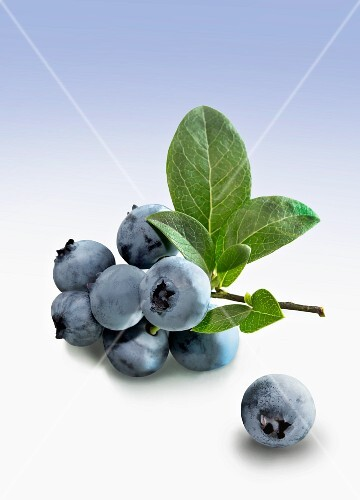 Blueberries with stems and leaves