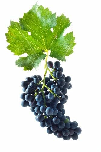 Cabernet Carbon grapes with a vine leaf