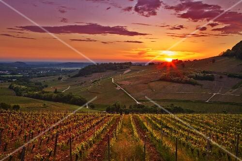 Sunset over vineyards between Château-Chalon and Menétru-le-Vignoble. Jura, France. [Château-Chalon]