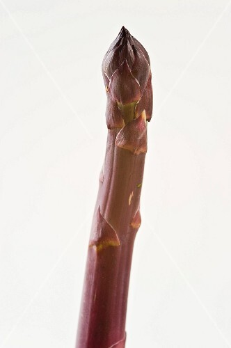 A spear of purple asparagus against a white background