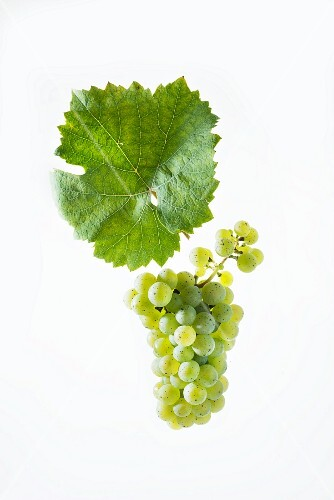 Riesling grapes with a vine leaf