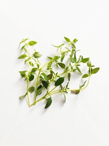 Fresh sprigs of thyme
