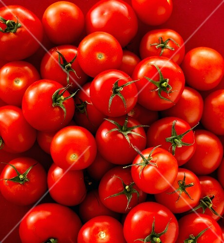 Tomatoes seen from above