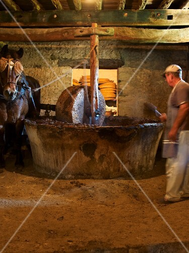 A horse driving a millstone for a press