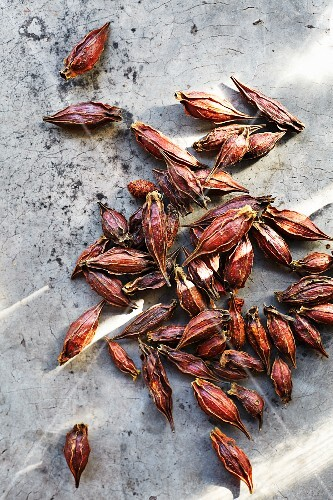Kek-houi (Chrysanthemum seeds, a Thai seasoning)