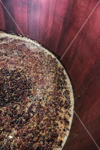 Red wine mash fermenting in an open wooden vat, lower Aaretal